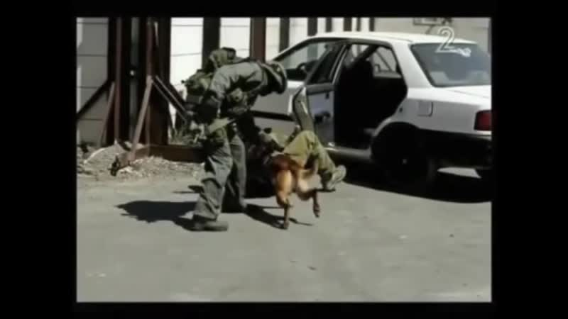 Israeli Special Tactics K9_ Real Life Experience, Produce Real Dogs and Handlers
