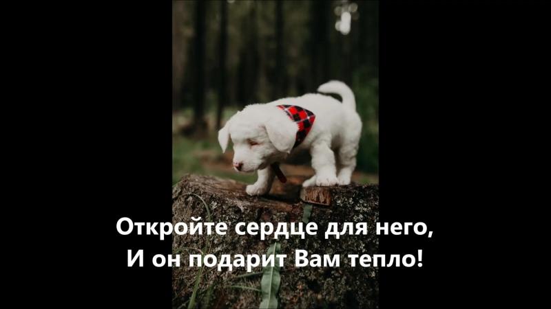 Снежок, Ангел слепой Автор ролика Галина Широкорад.