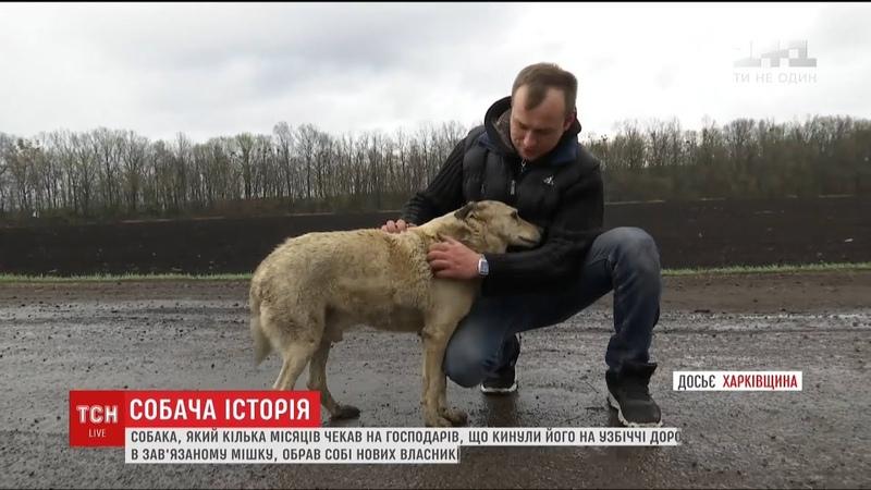 Пес, якого господарі покинули у завязаному мішку, обрав собі новий дім