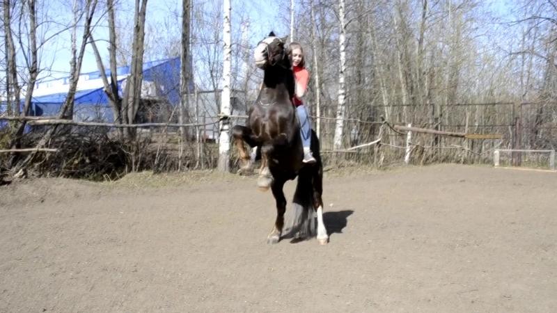 Немного о конном спорте и нашей конюшне