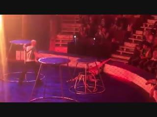 Цирк Багдасаровых. Приступ и конвульсия у тигра