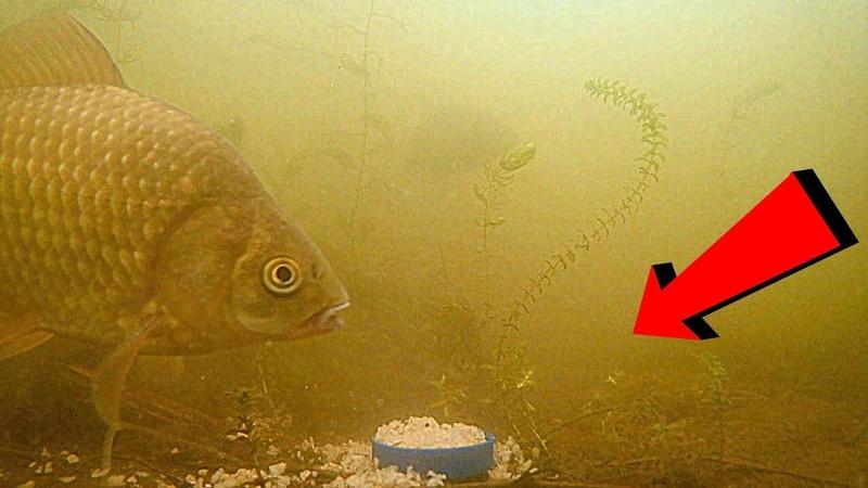 ГРЕЧКА С ЧЕСНОКОМ в действии! Карась, линь, плотва, окунь. Подводная съемка