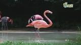 Flamingo Michael Jackson