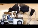 Умный технология Умная сельское хозяйство корова Коза доение курица сбор Яйца свинья телен