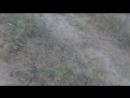 Видео привет от хозяев Кая!