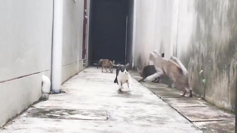 Как нужно убегать от корейских уличных котов гопников