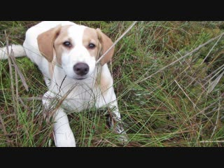 Джанга в болоте помогает собирать клюкву.