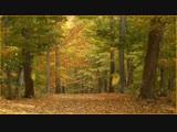 Музыка Осени. Буйство Красок! Очень Красивый Видео Клип без Слов! Посмотри!