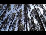 Сплав по Кондурче. Прогулки в сосновом лесу.