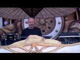 Paul Kalkbrenner - Feed your head (Tomorrowland Belgium 2018) HD 1080