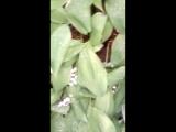 ПоДАРок природы,полянка ландышей в лесу 16.06.18