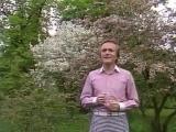 Евгений мартынов - Яблони в цвету.