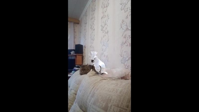 Шэли и попугайчик