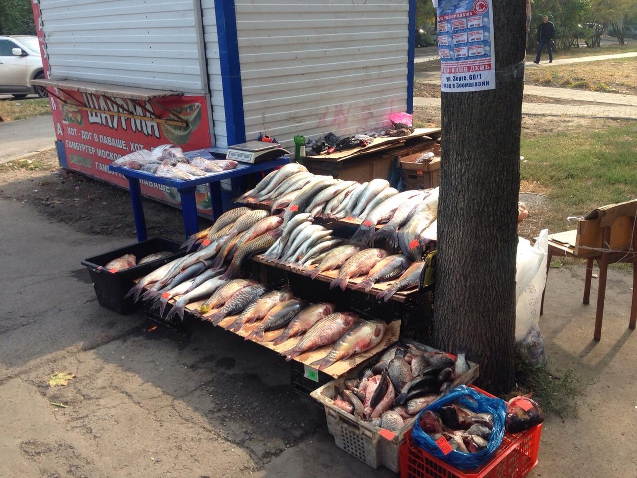 Донские ветинспекторы задержали более 26 тонн рыбы и раков