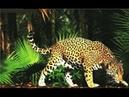 Леопарды детеныши мучают свою мать