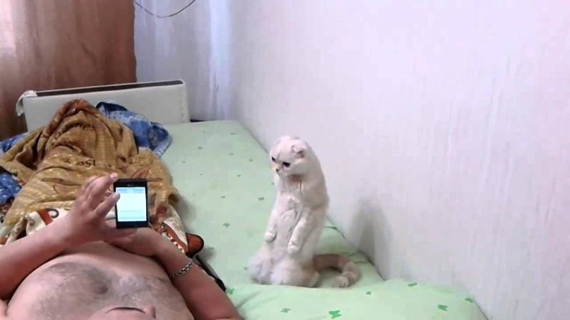 Кот слушает гимн России стоя (ПАТРИОТ)