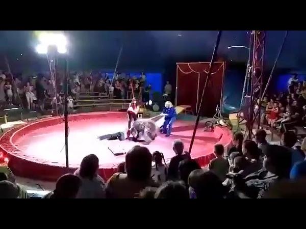 Медведь едва не убил дрессировщика