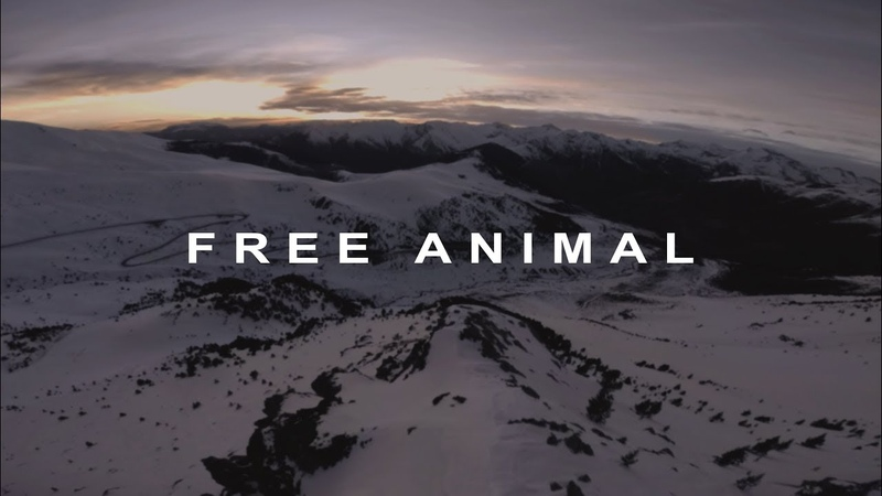 Free Animal Best of FPV Drone Shots