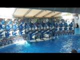 SAM_4876 Сочинский дельфинарий. часть 3