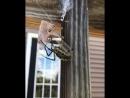 Паук за секунду опутывает паутиной кузнечика ?? Одновременно пугающая и прекрасная природа!