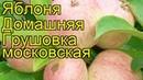 Грушовка