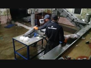 риба завод