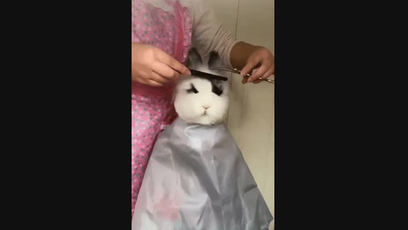 Rabbit Haircut