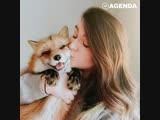 Самая популярная в Instagram лиса