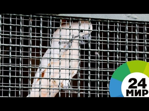 Птичий угодник петербуржец смог приручить перелетных птиц МИР 24