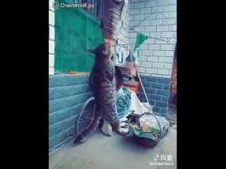 Кот повис на рыбе и ест её