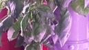В гостях в Родовом Поместье Балакиных Круглогодичное выращивание зелени