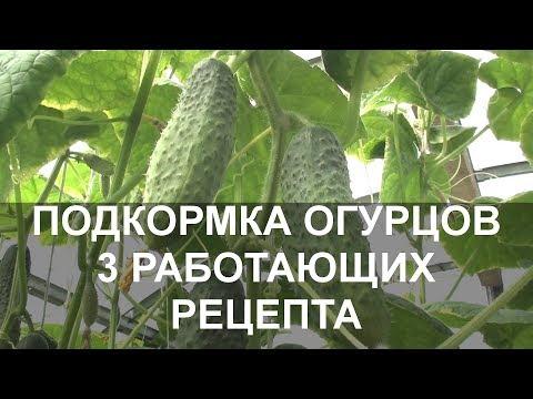 Подкормка Огурцов Народными Средствами 3 Работающих Рецепта