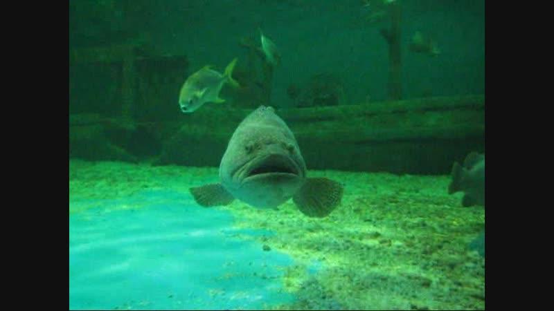 Подводный мир. Бангсаен. Таиланд