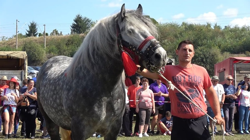 Concurs cu cai de frumusete   Calarasi Gara, Cluj   8 Septembrie 2018