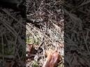 Крупный уж греется на солнышке в Беларуси пробудились змеи.