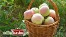 Как посушить Яблоки на зиму в домашних условиях. Простой доступный способ