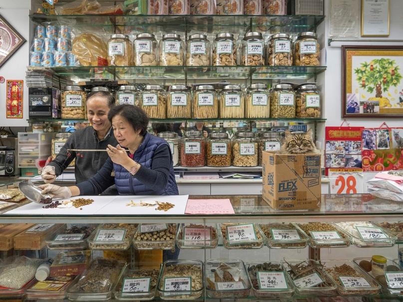 Тайная жизнь кошек в магазинах Гонконга фото