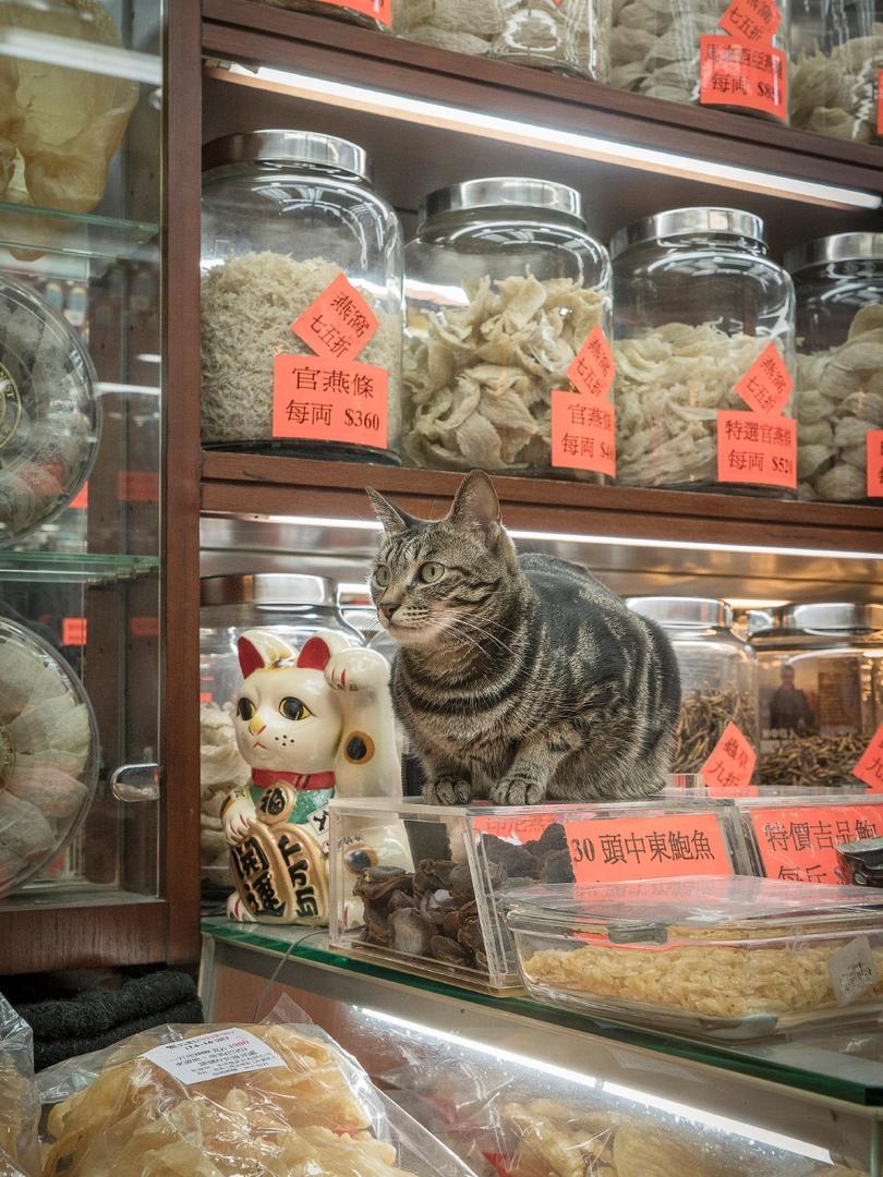 жизнь кошек в магазинах китай фото