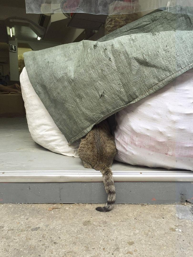 жизнь кошек в магазинах Гонконга фото