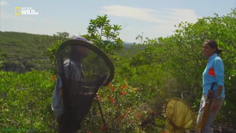 Дикая Колумбия 3 Чирибикете Путешествие к сердцу Амазонки Познавательный природа животные 2014