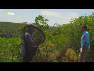 masturbatsiya-veb-porno-plyazhi-amazonki-dokumentalniy