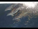 Дельфины около корабля