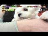 Perfume - Pets (Uchi no Gaya ga Sumimasen! NTV 2018.08.14)
