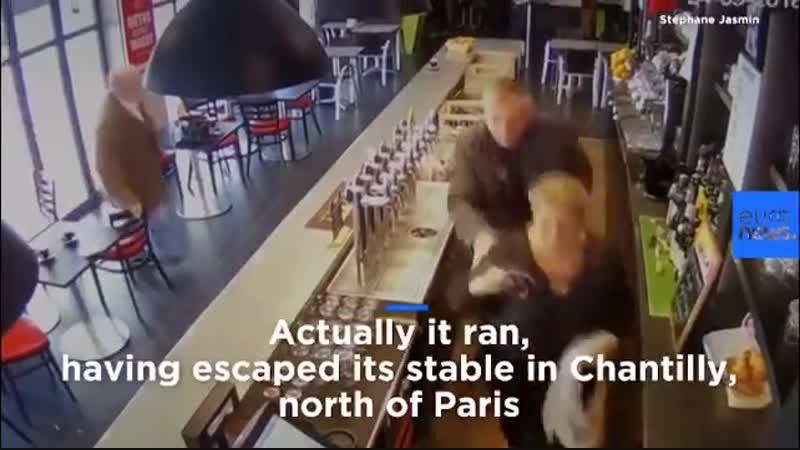 Лошадка в баре выпить захотела
