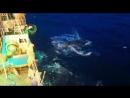 поймали кита