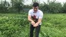 Как правильно наклоняться при болях в спине без вреда для позвоночника Охота на колорадского жука