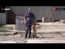 Служебные собаки УФСИН по Удмуртии