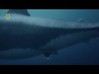 Доисторические хищники : Акула-чудовище