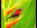 пения птиц singing birds