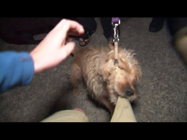 RAW Dog Attacks Cameraman, Gets Tasered